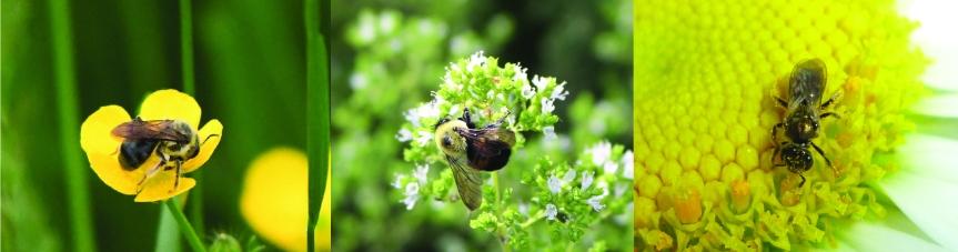 ¿Es este insecto unpolinizador?
