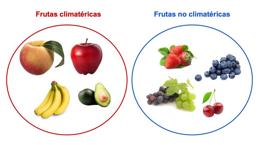¿Cómo se regula la maduración de lasfrutas?