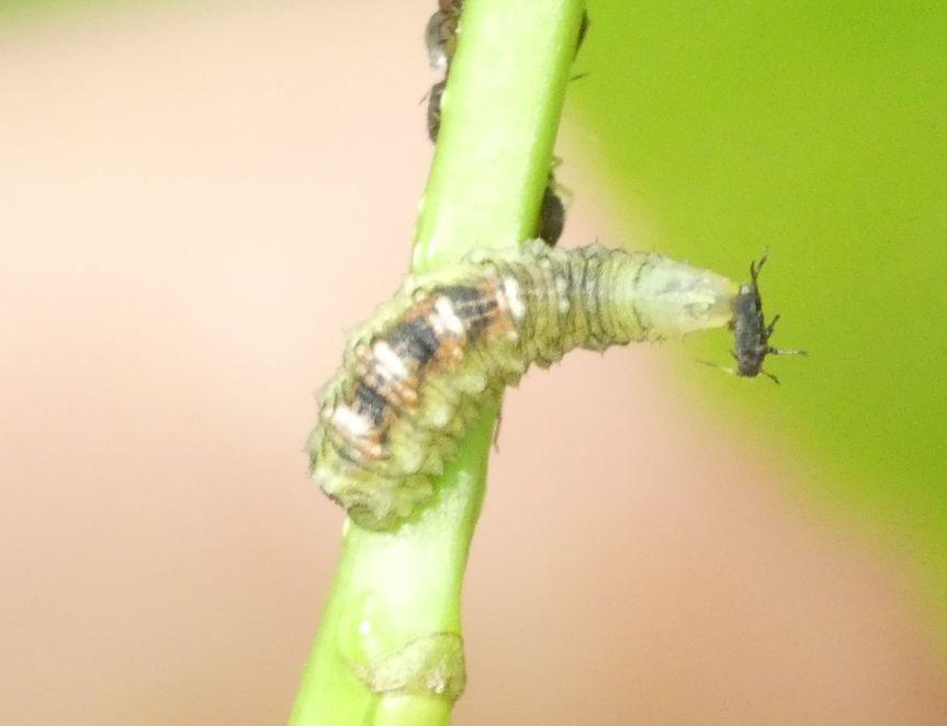 Control de plagas sin insecticidas – Lossírfidos
